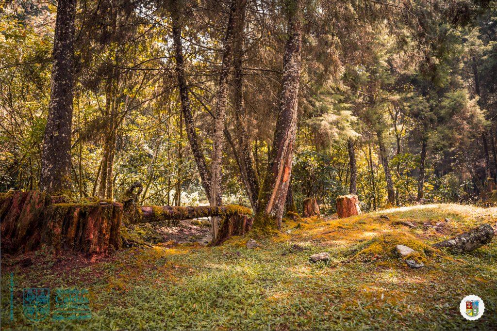 Campiño, Alto de San Miguel-4