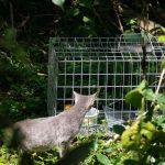 Jornada de esterilización de gatos ferales